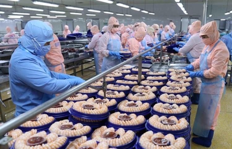Chế biến tôm xuất khẩu tại nhà máy của Tập đoàn Minh Phu Seafood Corp tại Khu công nghiệp Nam Sông Hậu, tỉnh Hậu Giang. (Ảnh: TTXVN)