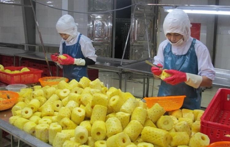 Chế biến dứa tại Công ty cổ phần Thực phẩm xuất khẩu Đồng Giao, thành phố Tam Điệp, Ninh Bình. (Ảnh: TTXVN)